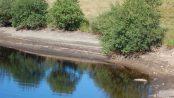 Hosepipe Ban Southern Water 2019